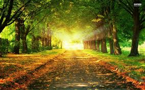 light-road-nature