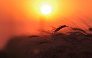 sun-nature