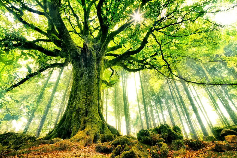 peace-unity-nature